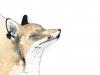 fox drip new
