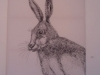 Dormy Print Hare