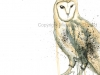 owl low res